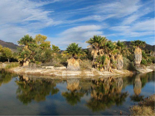 Agua Caliente, Arizona - tem uma característica que o difere de outros oasis, porque é alimentado por uma fonte termal. As lagoas que compõem o oásis fazem parte de um parque regional no deserto de Sonoran. As palmeiras  ao longo do córrego e da lagoa contratam com as paisagens desérticas -  Foto: Katja Schulz/Wikimedia Commons