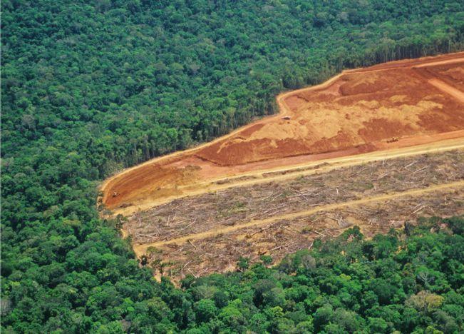 amazonia site 4