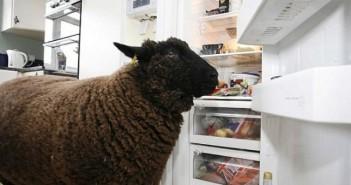 geladeira economia 1