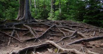 intelligent trees1