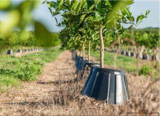 Um protetor que reduz em 90% a necessidade de água e fertilizantes de árvores. Confira!