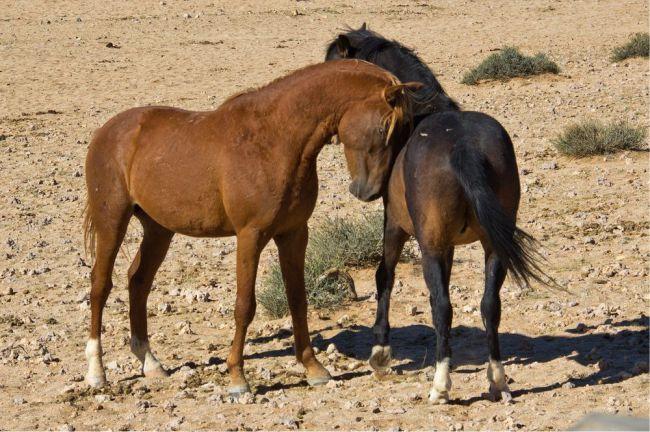 cavalo6