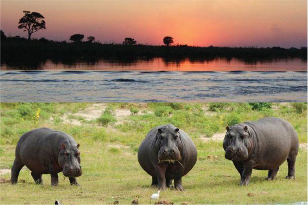 A Área de Conservação Transfronteiriça do Kavango (Zâmbia) situada em uma região da África Austral, onde convergem as fronteiras internacionais de cinco países.